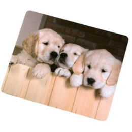Hama Puppies